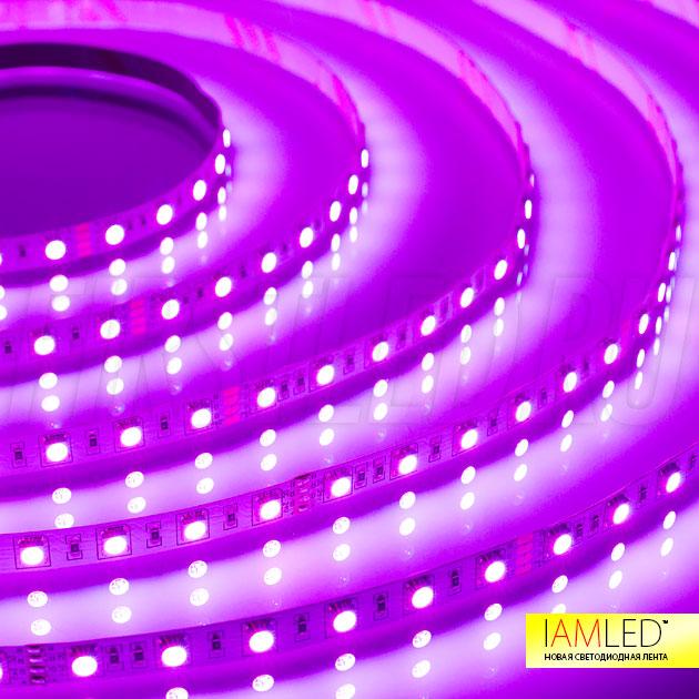 Розовый оттенок светодиодной ленты IAMLED RGB 60