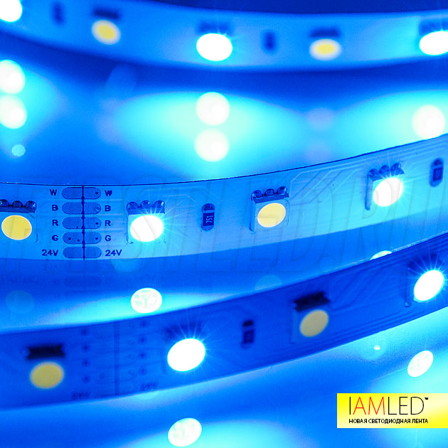 Мультицветная светодиодная лента IAMLED RGB WHITE 60 — Синий цвет